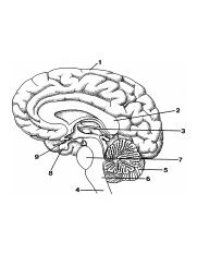 Blank Brain Diagram : blank, brain, diagram, Awesome-brain-diagram-unlabeled-body-diagram-with-blank-diagram-of-the-brain-to-label-2018.jpg, Course