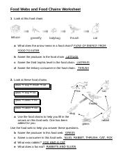 Food Web Worksheet Answer Key : worksheet, answer, FoodWebsandFoodChainsWorksheet-KEY-11dbru5.doc, Chains, Worksheet, Chain, Lettuce, Greenfly, Ladybug, Thrush, Course