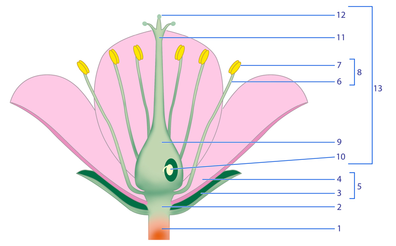 flower parts diagram without labels pool timer wiring intermatic identify and label of schematic flowers plant using the floral
