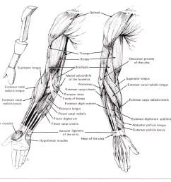 cse490ca spr2000 reference materials rh courses cs washington edu human hand diagram human brain diagram [ 1039 x 981 Pixel ]