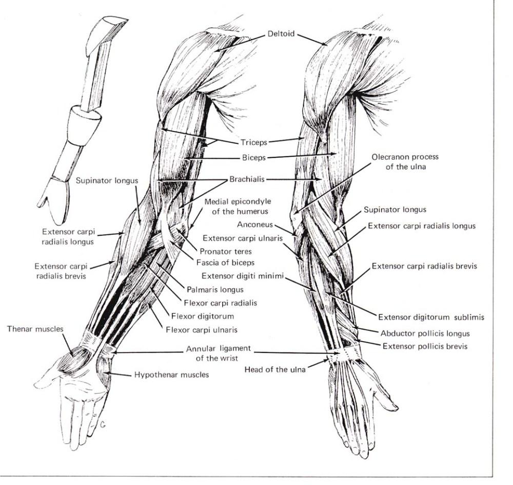 medium resolution of cse490ca spr2000 reference materials rh courses cs washington edu human hand diagram human brain diagram
