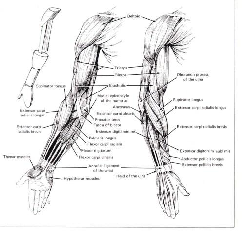 small resolution of cse490ca spr2000 reference materials rh courses cs washington edu human hand diagram human brain diagram
