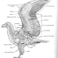 Bird Bone Structure Diagram 2002 Dodge Ram Wiring Cse490ca Spr2000 Reference Materials