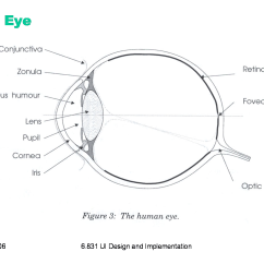 Canine Eye Diagram Audi A4 Parts Cornea