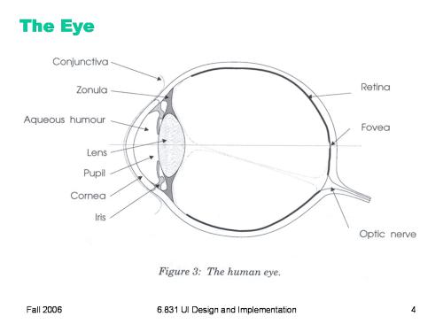 small resolution of eye diagram quiz game