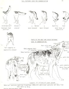 This drawing shows also wolf ethology communication rh courses oermn