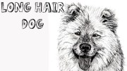 draw long haired dog