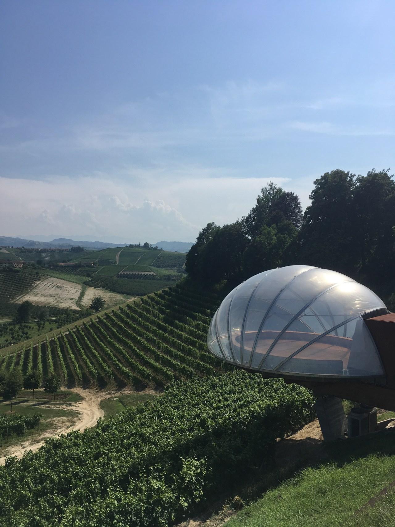 vue sur les vignes du piémont