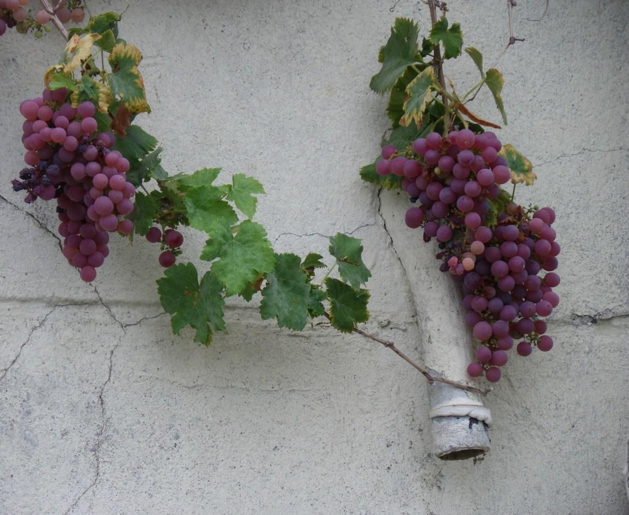 Rentrée ateliers vins Paris
