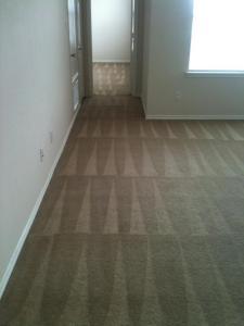 clean carpet lines