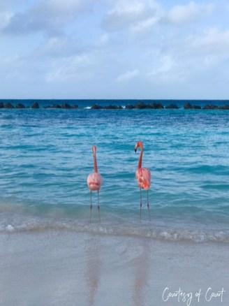 Flamingo Beach _Courtesy of Court25