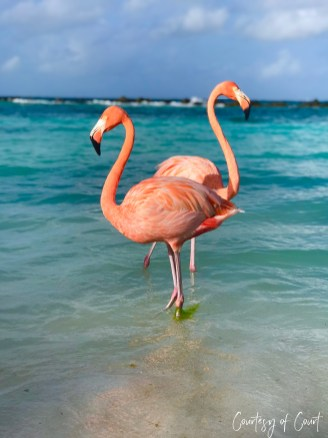 Flamingo Beach _Courtesy of Court35