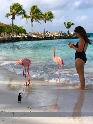 Flamingo Beach _Courtesy of Court36
