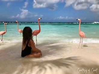 Flamingo Beach _Courtesy of Court66