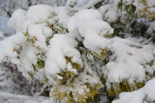 De la neige dans les Appalaches_10