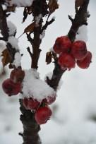 De la neige dans les Appalaches_2