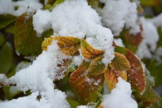 De la neige dans les Appalaches_7