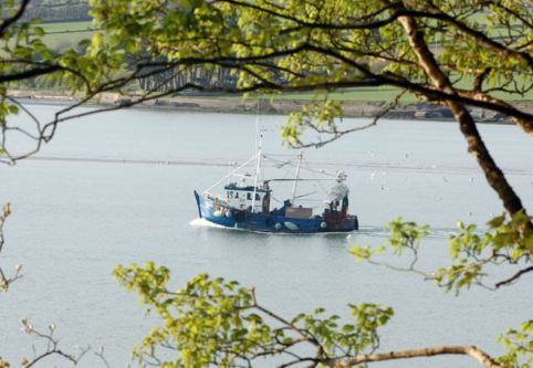 A fishing trawler is framed amongst tree bracches as it makes its way back to Courtmacsherry Pier in West Cork. Picture: Martin Walsh.