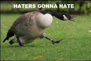 Goose-hate