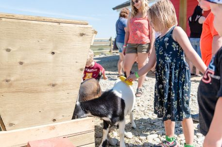 Brushing goats at the petting zoo at Granary Road