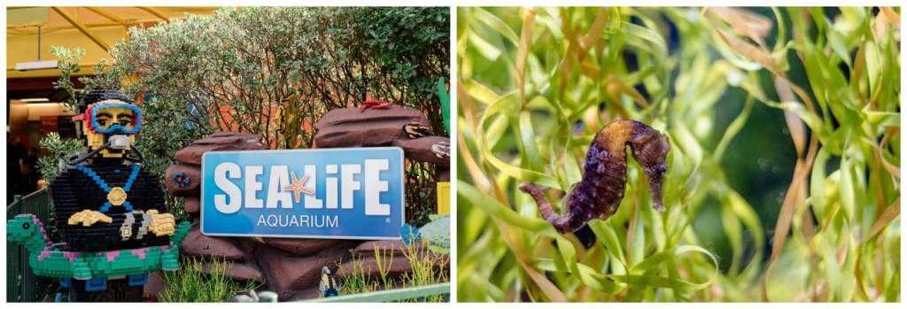 Regina Wedding Photography - Legoland California - Liske Family Travels - Legoland - Sea Life Aquarium - Seahorse