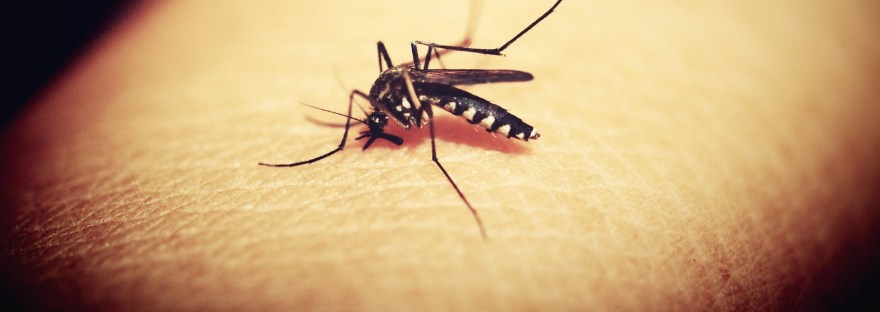 Insect Repellent Is Essential To Prevent Disease