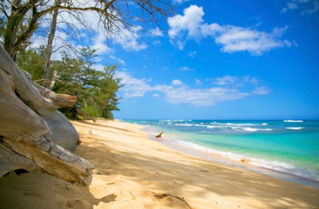 Driftwood Beach copy
