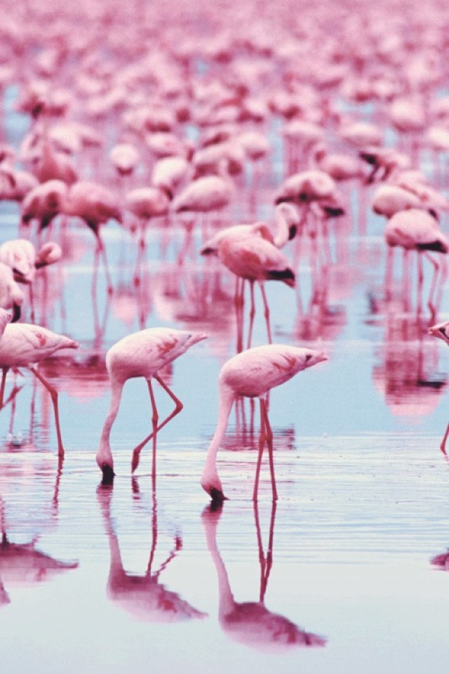 Pantone's Color of the Year 2016 Flamingos