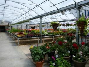 Court's Greenhouse