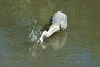 Heron Hunting