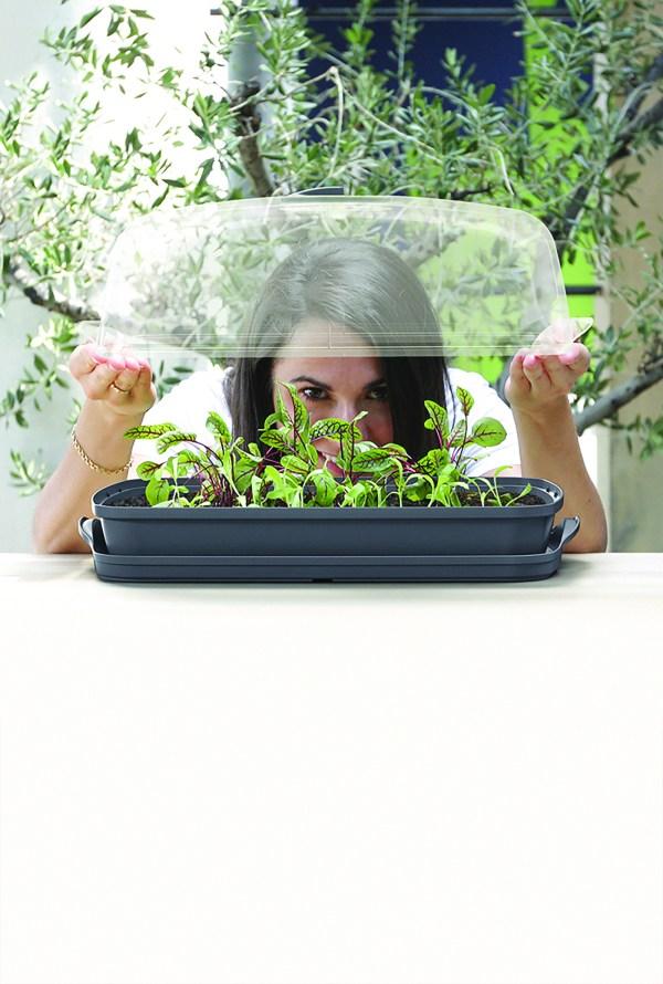 mini table top greenhouse