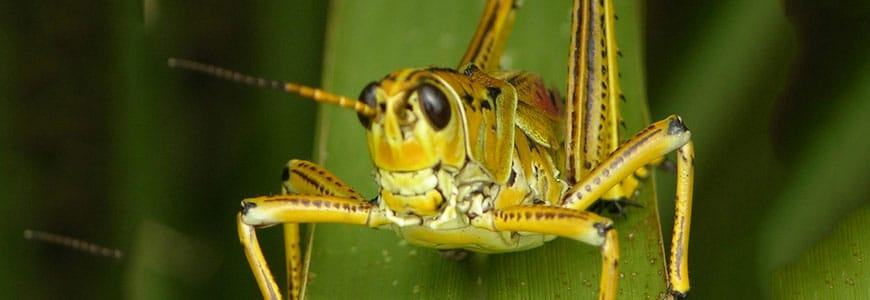 The 12 Worst Insect Invaders