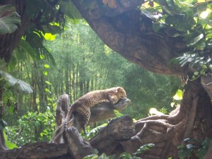 Leopard at Bali Marine and Safari Park