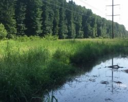Water puddle in cleared area where power lines run