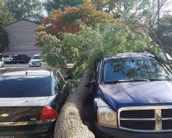 A large tree laying between two cars parked next to each other in a parking lot