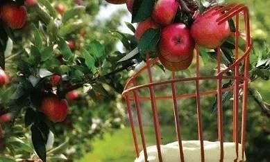 Fruit Picker Cover Letter Sample Clr