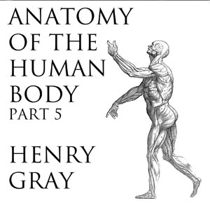 Listen to Anatomy of the Human Body, Part 5 (Gray's