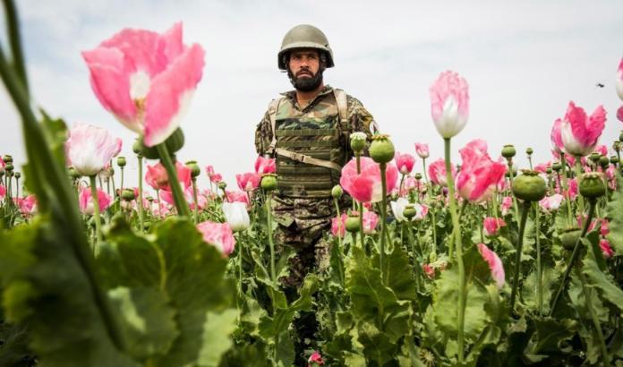 Afganistán: el surgimiento de un narcoestado | El mundo de PRX