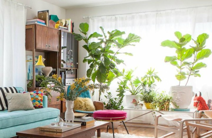 living room with plants | Conceptstructuresllc.com