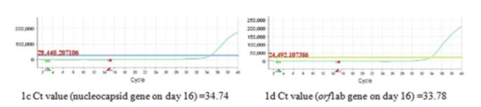RT-PCR-1