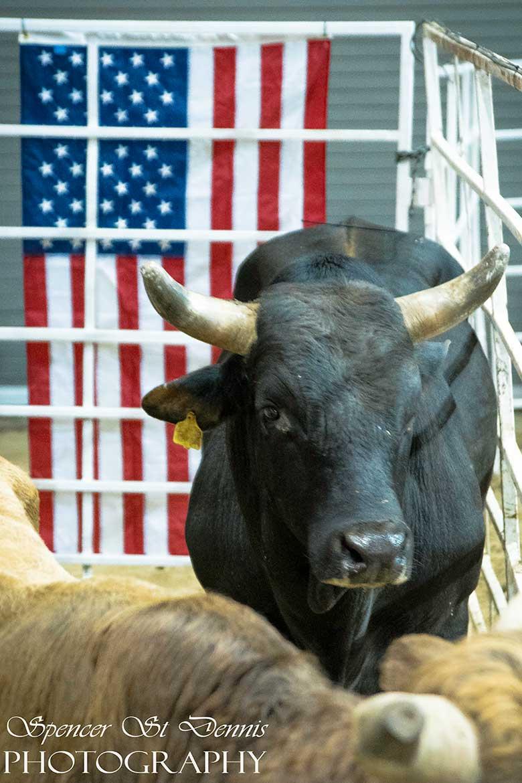 Bucking Bull Sniper Named For Fallen Marine Will Buck On