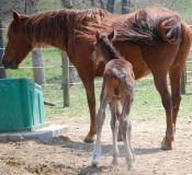 Horse Stables Colt
