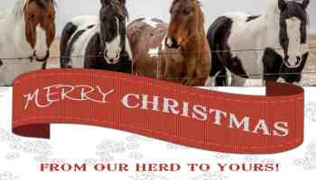 Horse-Christmas-cards