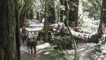 Redwoods Ride