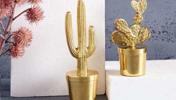 cactus accessories