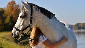 Cowgirl - Reward