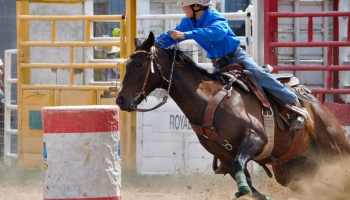 Barrel Racing Basics