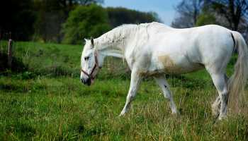 """Cowgirl Magazine"" - Lame Horse"