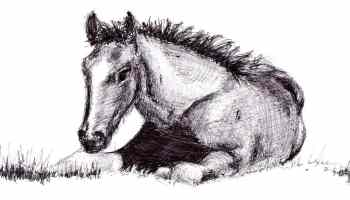 """Cowgirl Magazine"" - Draw Horse"