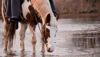 Cowgirl Lingo